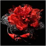 髪飾り(HA-009) 鮮やかな深みのある赤花 シルバーブラック系レースの髪飾り